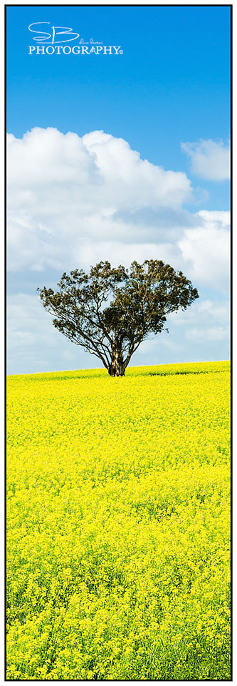 Photograph Canola Tree by ShaneBeaton on 500px