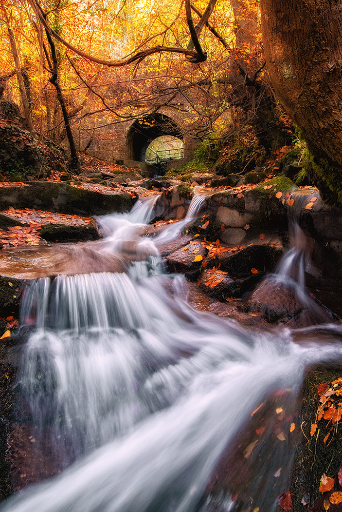 Photograph Gold Rush by Gary Howells on 500px