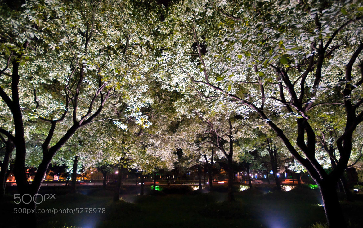 Photograph Dream of city's trees by Mihail Bidnichenko on 500px