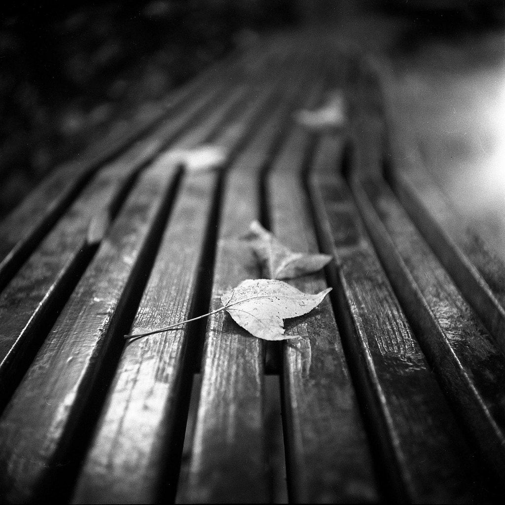 Photograph On the bench by Colourful  Life on 500px