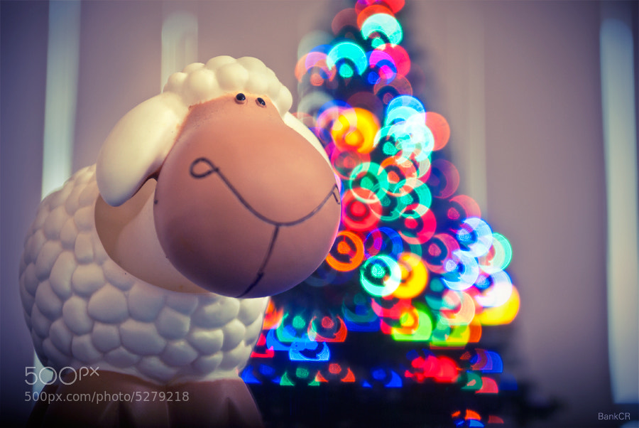 Photograph Little Sheep by poneaks sirivetaumnuikit on 500px