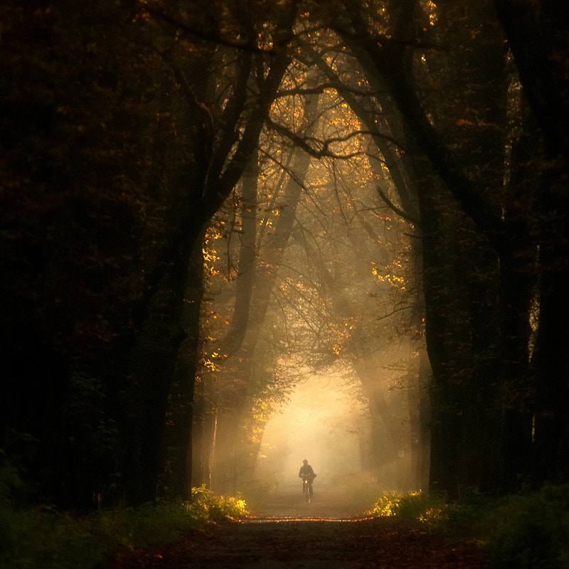 Photograph In forest by Marcin Sobas on 500px