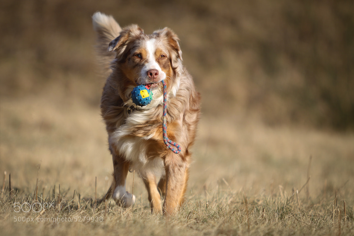 Photograph ball games by Mathias Ahrens on 500px