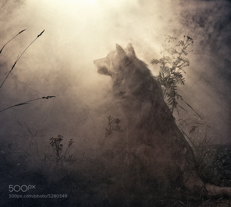 Photograph wolf... by Irina  Mastalyarchuk on 500px