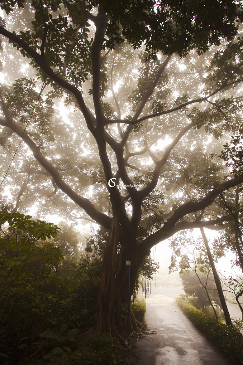 Photograph mist by Sam Chao on 500px