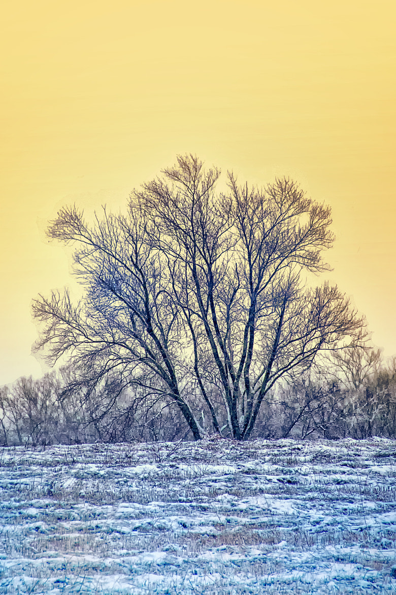 Photograph Cold Sunset Tree by Bill Tiepelman on 500px