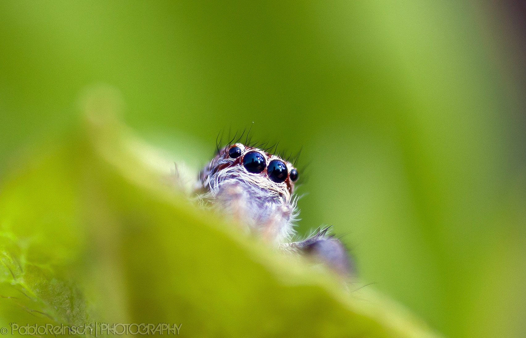 Photograph Spying by Pablo Reinsch on 500px