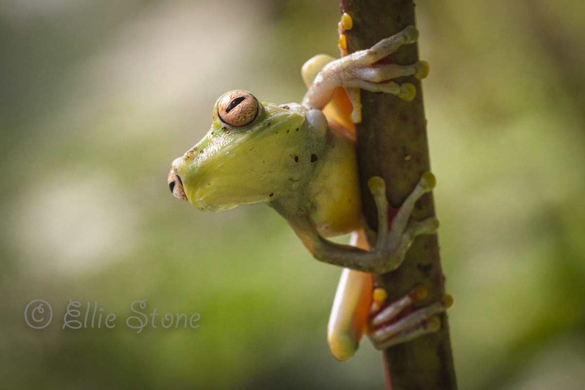 Photograph Curious the frog by Ellie Stone on 500px