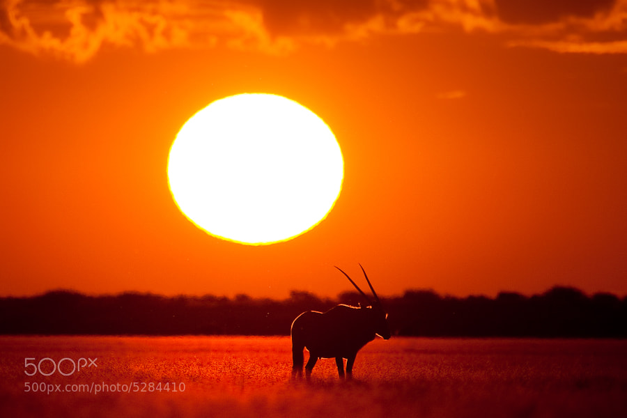 Photograph Kalahari Heat by Mario Moreno on 500px