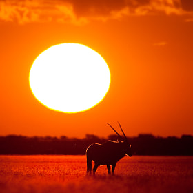 Kalahari Heat by Mario Moreno (mariomoreno)) on 500px.com