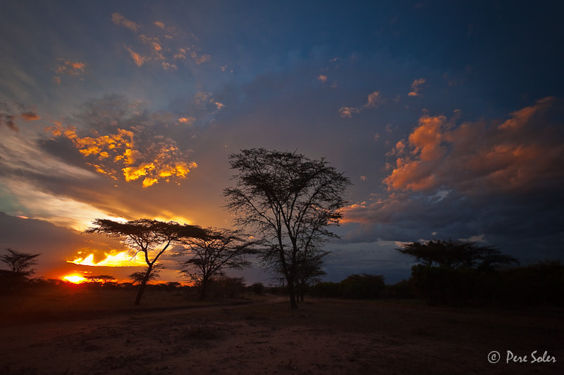 Photograph Out of Africa by Pere Soler on 500px