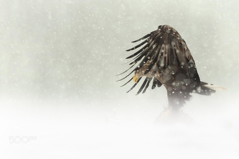 "Photograph ""Dark Angel"" by Andy Astbury on 500px"