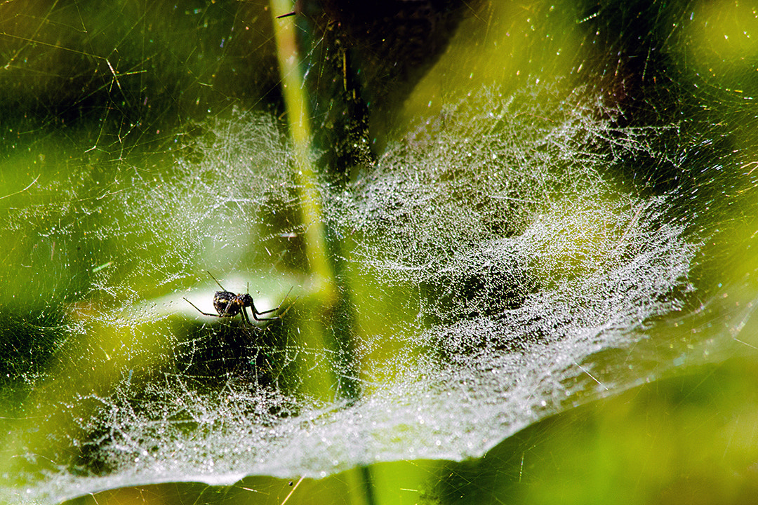 Photograph Spider and The Web... by Amod Sane on 500px