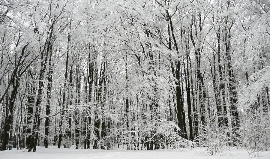 Photograph Frosted trees by Benno Pütz on 500px