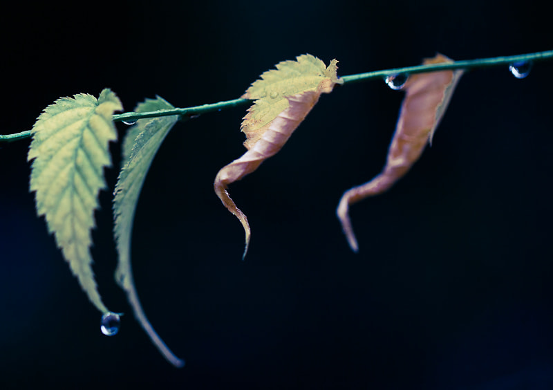 Photograph 4 leaves in autumn by Ju Sana on 500px