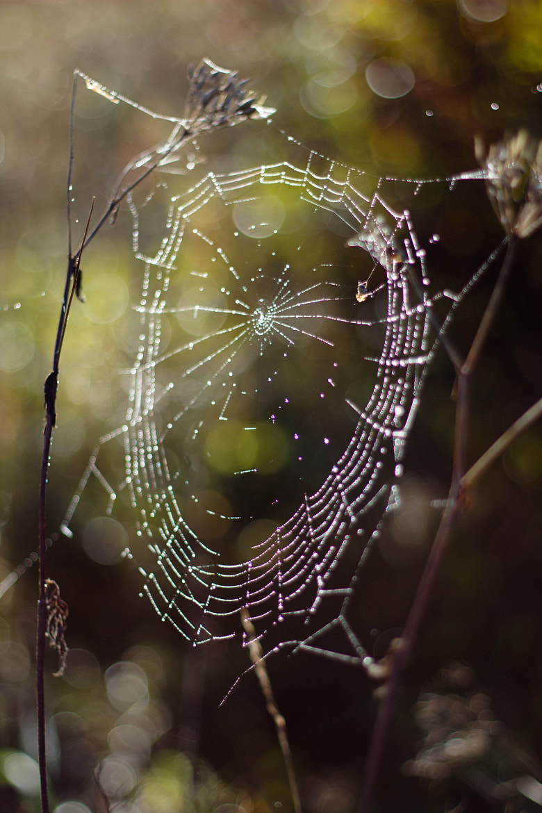 Photograph Spider web by Heike Kitzig on 500px