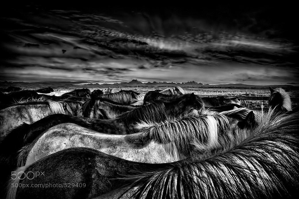 Photograph Horses by Danilo Atzori on 500px
