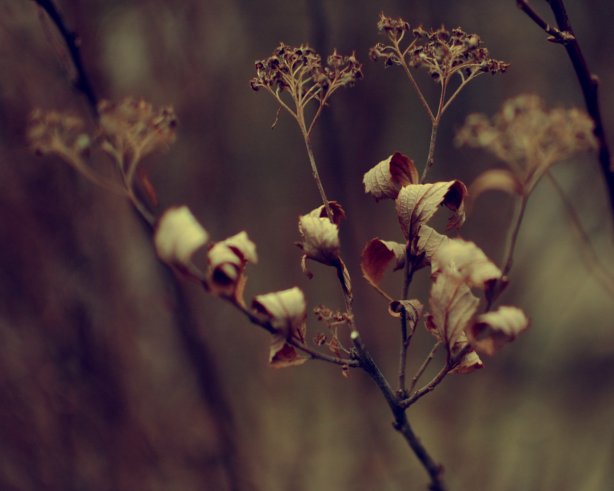 Photograph Curls by Allana Mayer on 500px