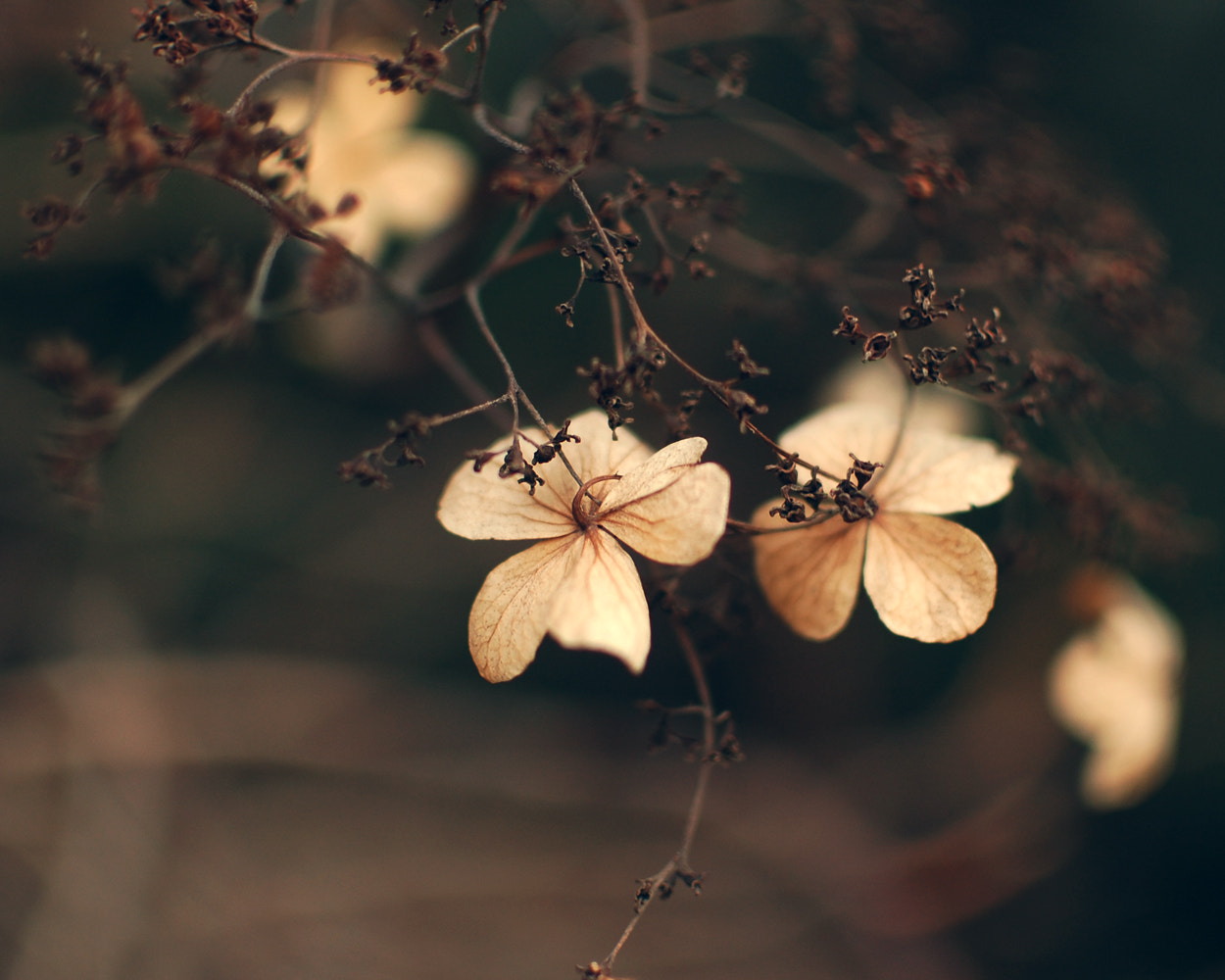 Photograph Delicate by Allana Mayer on 500px