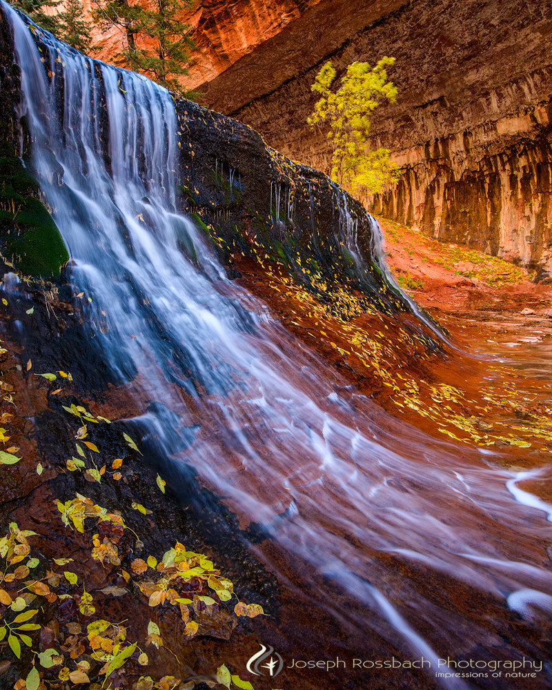 Photograph Cascade of Color by Joseph Rossbach on 500px
