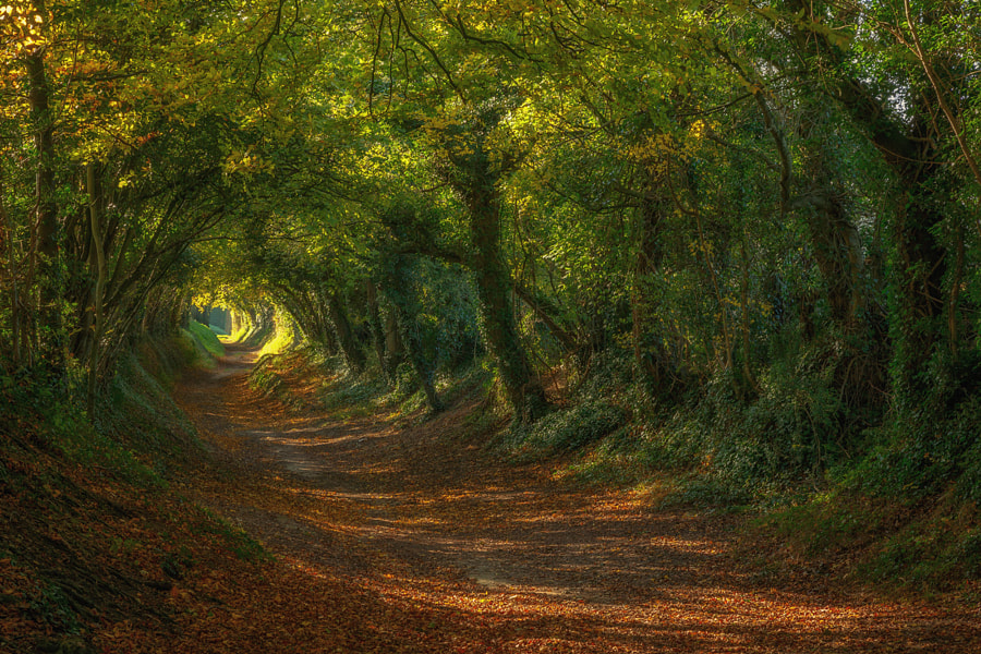 Hobbit by Sam Moore on 500px.com