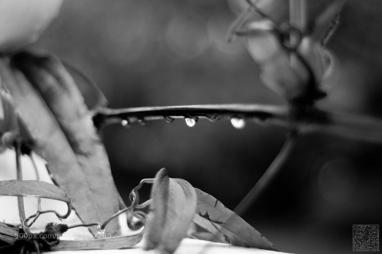 Photograph Rain drops by Saud Khan on 500px