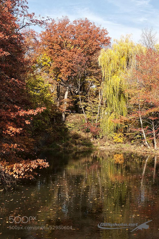 Photograph Autumn's lake by Darek Siusta on 500px
