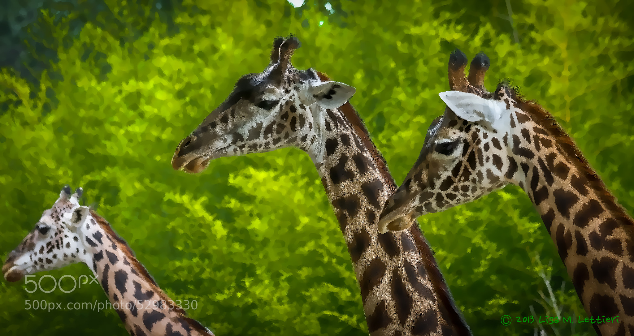 Photograph Three Amigos by Lisa Lettieri on 500px