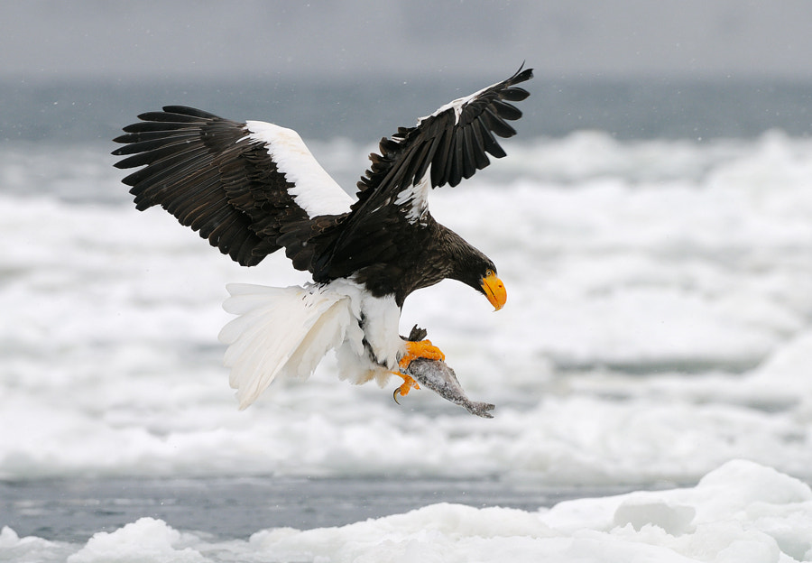 As Cold As Ice by Harry  Eggens on 500px.com