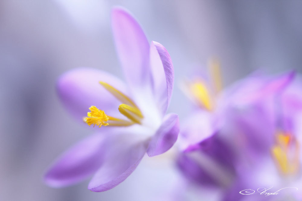 Photograph Signs of spring. by Angela Raben on 500px