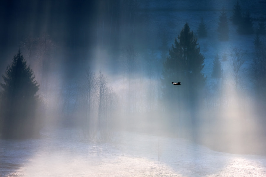 Photograph Free as a bird by Marcin Sobas on 500px