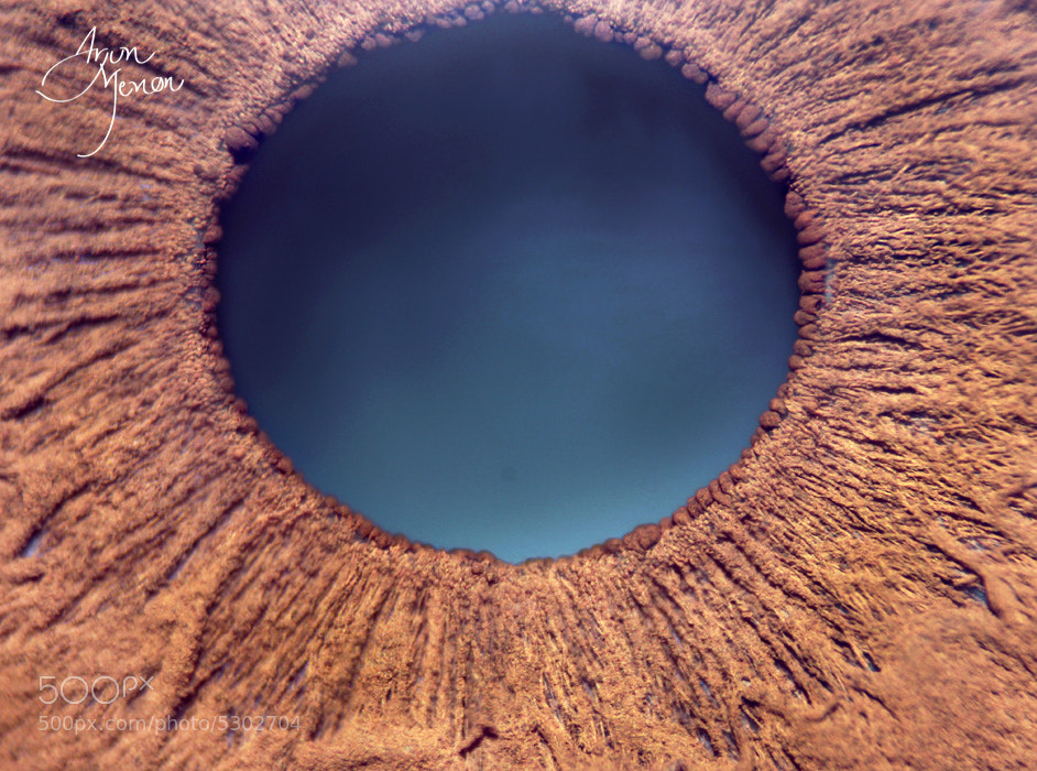 Photograph Behold The HUMAN EYE ! by Arjun  Menon on 500px