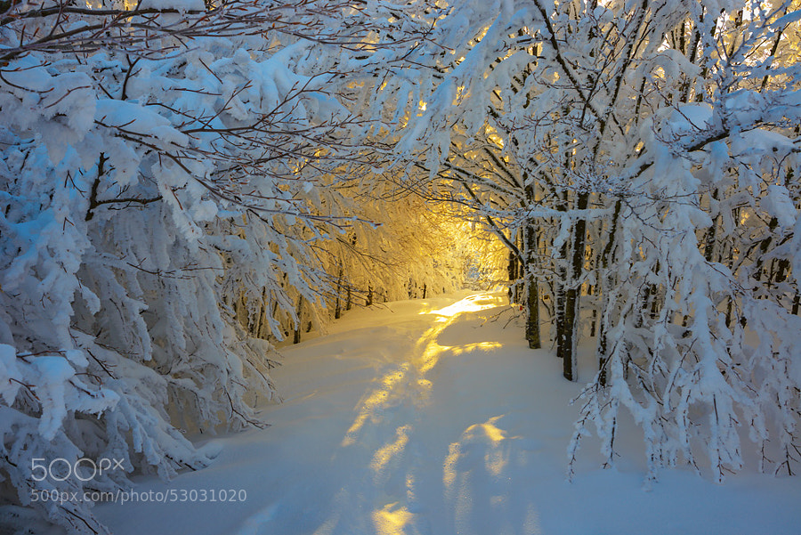 Photograph Sunrise in the snowy woods by Roberto Melotti on 500px