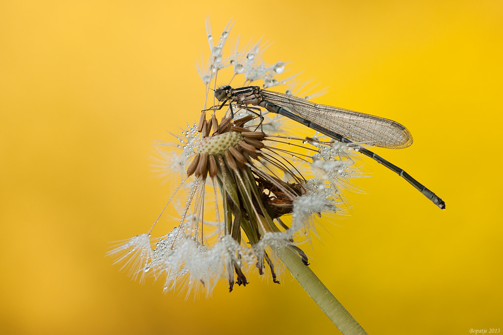 Photograph in to yellow by Patrick Boterman on 500px