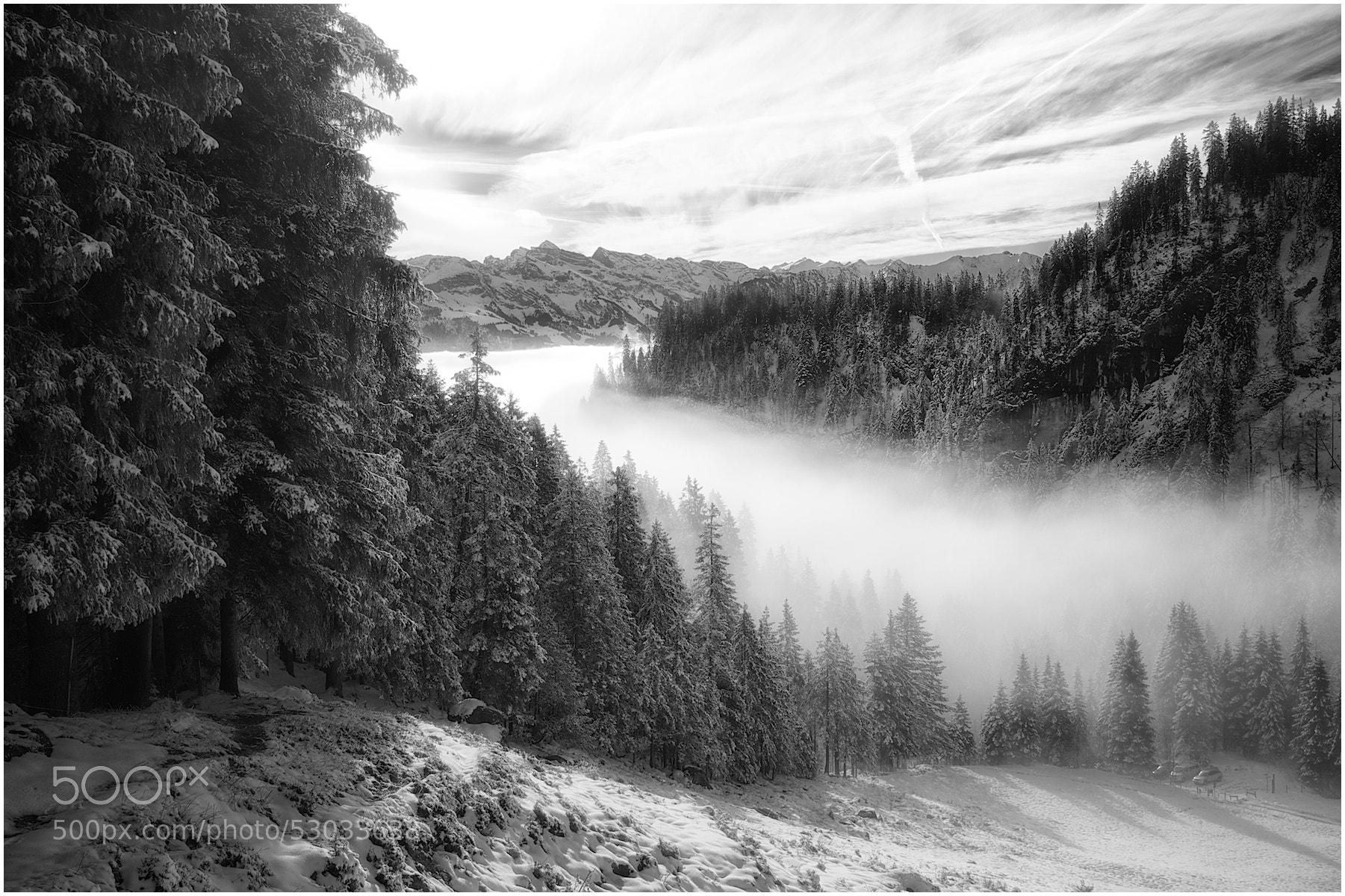 Photograph Winter dream by René Mederlet on 500px