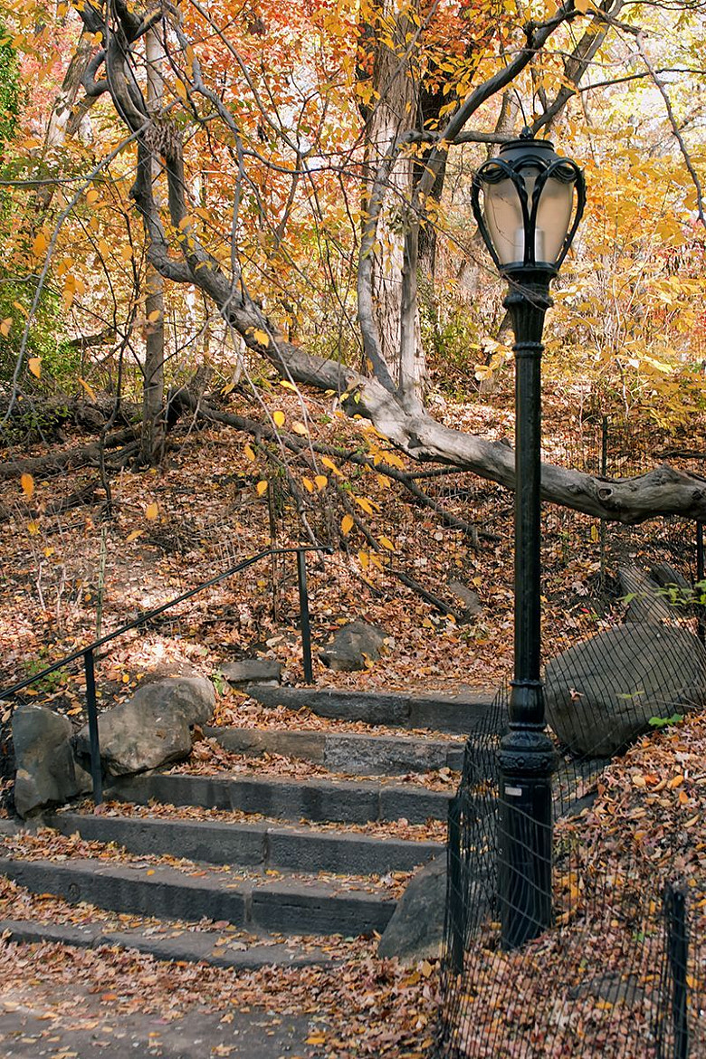 Photograph Lamp in Central Park by Darek Siusta on 500px