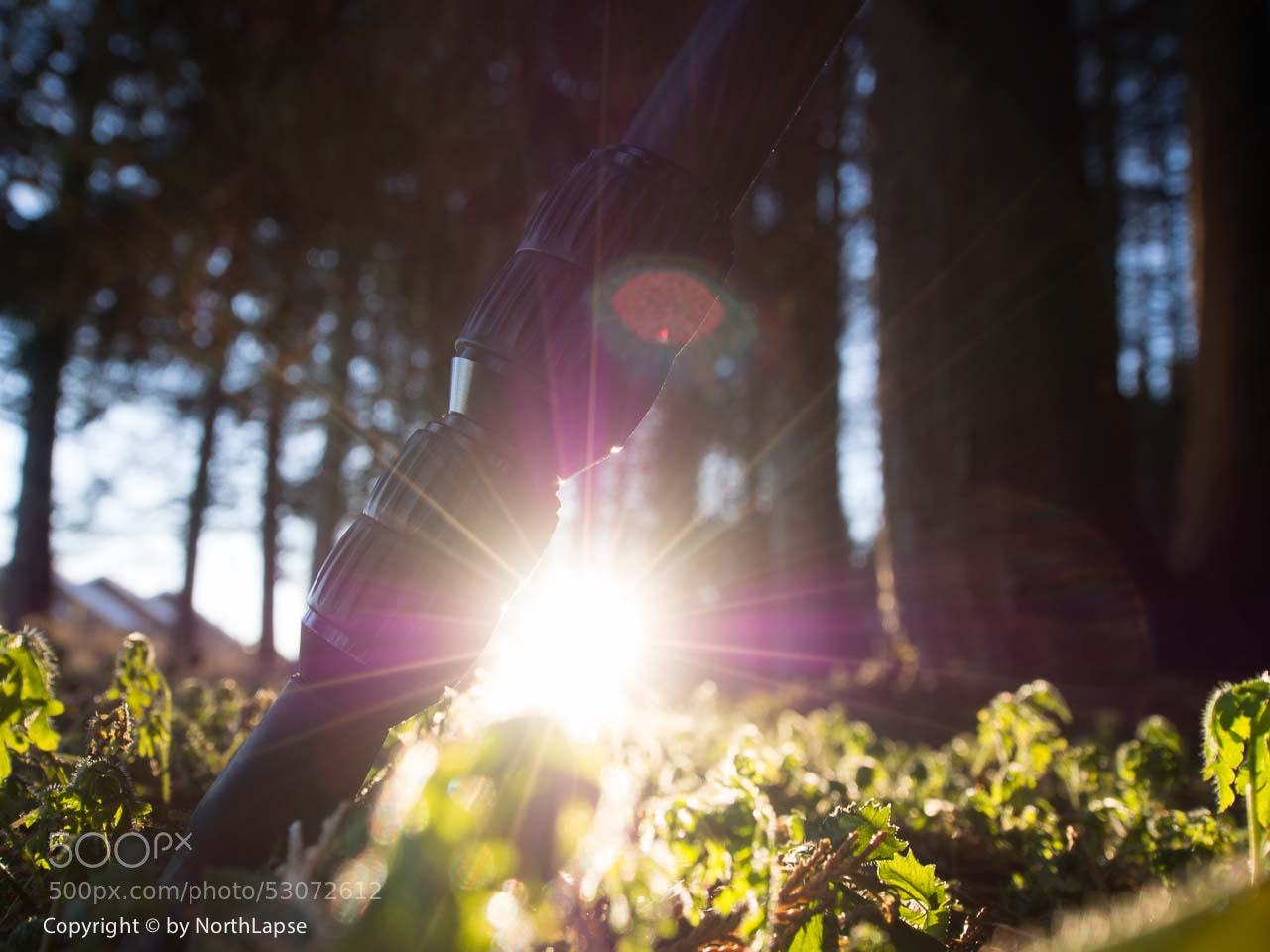 Photograph Low sun by Skog R. on 500px