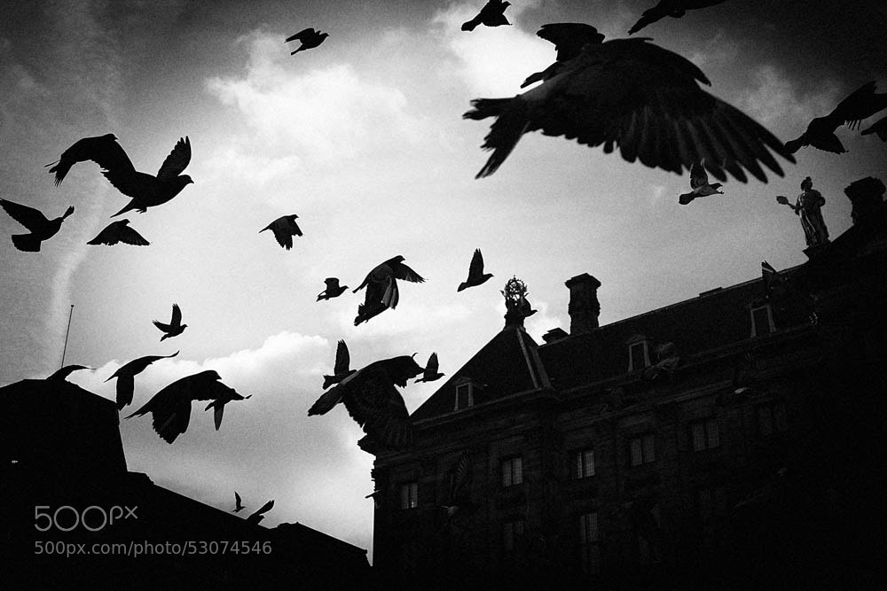 Photograph Amsterdam by Yuri Dolzhenko on 500px
