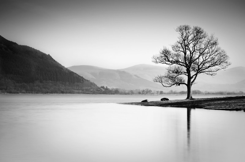 Photograph Bassenthwaite Tree by Stephen Wiggett on 500px