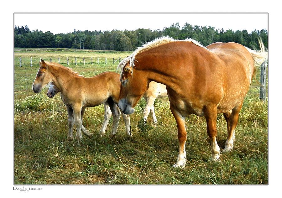 Hampton Work Horses