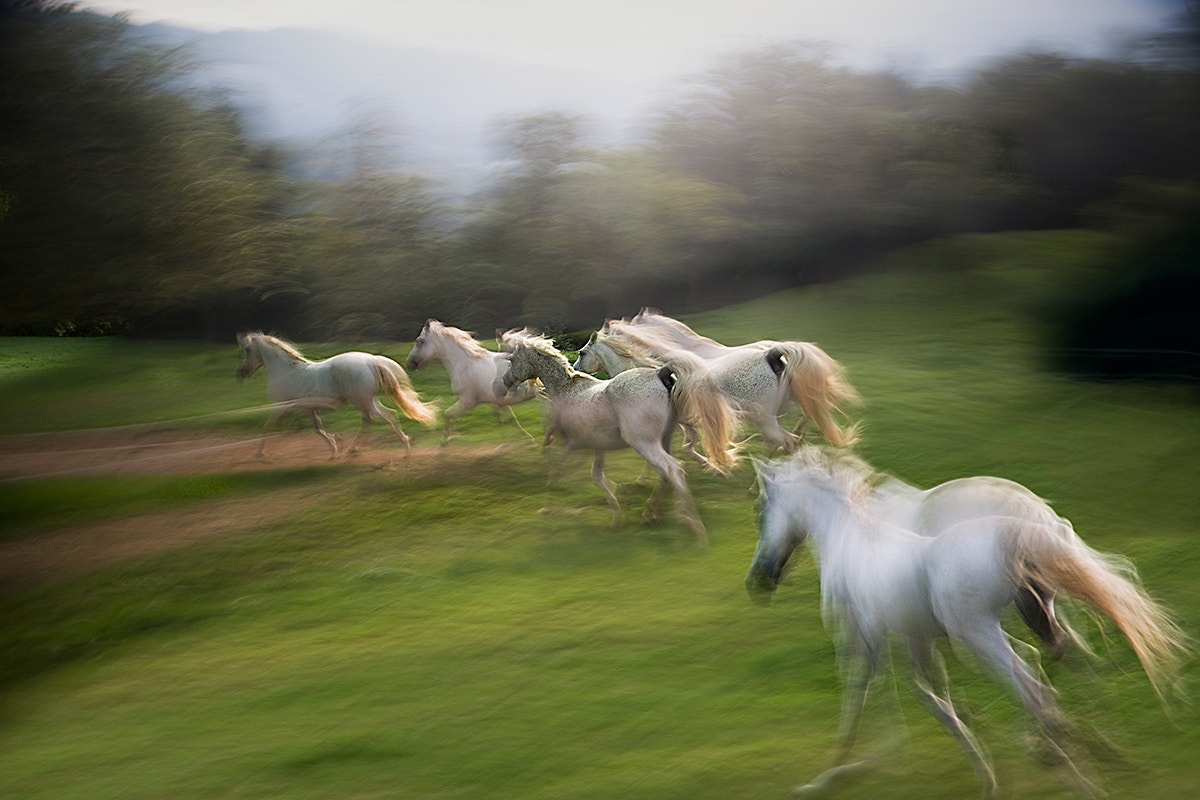 Photograph herd by Milan Malovrh on 500px