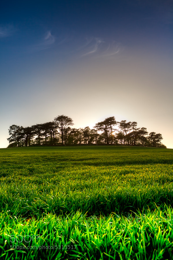 Photograph Copse by Russell Smith on 500px
