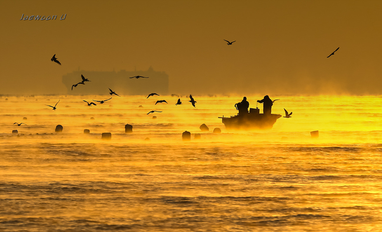 Photograph Golden morning by Jaewoon U on 500px