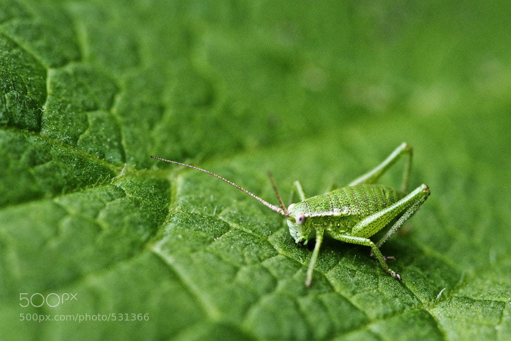 Photograph Grasshopper by Jörg Mattick on 500px