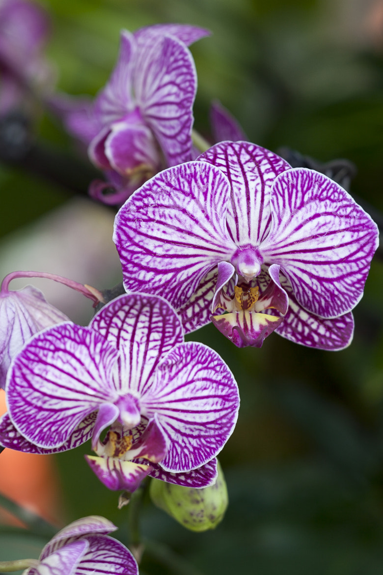 Photograph Orchids by Dean Bedding on 500px