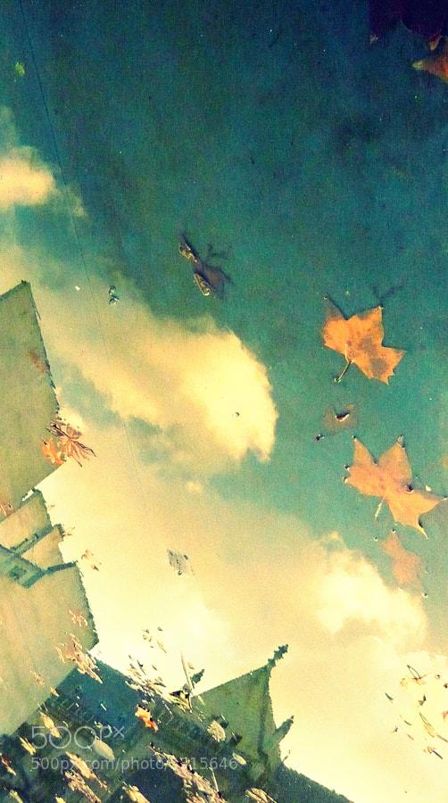 Leaves by Kleine rosa Kuchen (kleinerosakuchen) on 500px.com