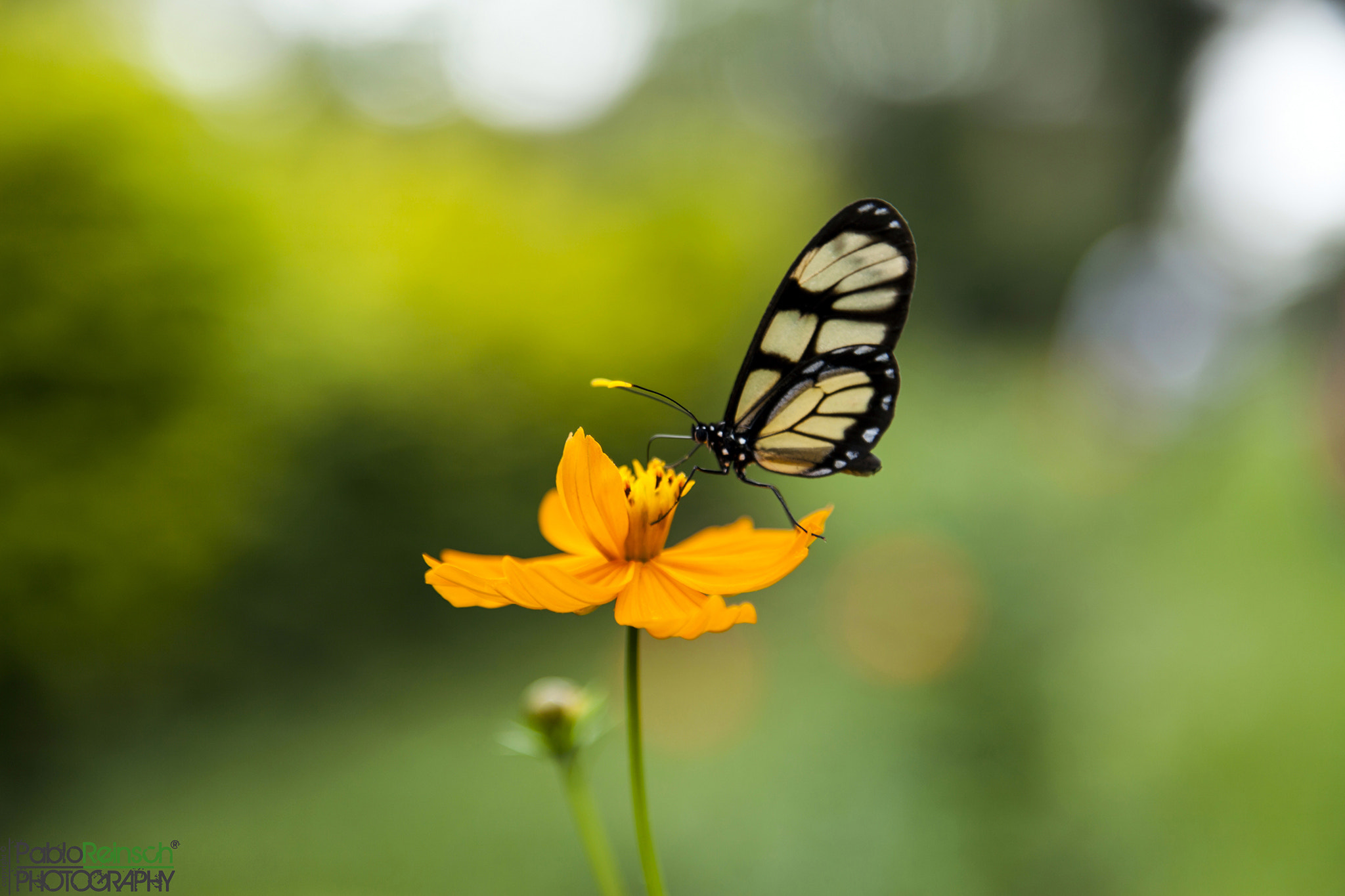 Photograph Mariposa.- by Pablo Reinsch on 500px