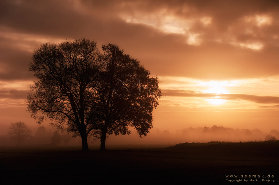 Sunrise on a autumn morning in northern Germany...the fog created a perfect mystic scene.