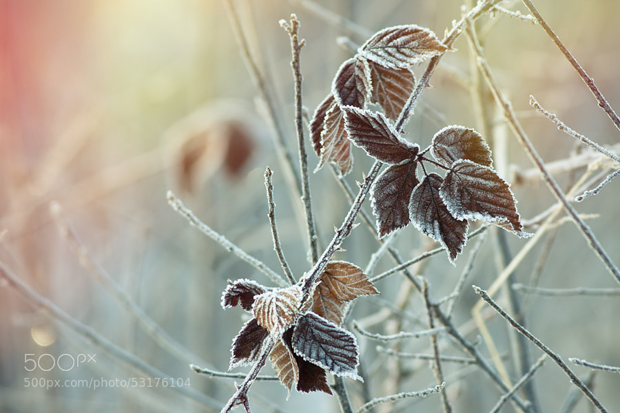 Photograph First day of winter by Tomasz Wieczorek on 500px