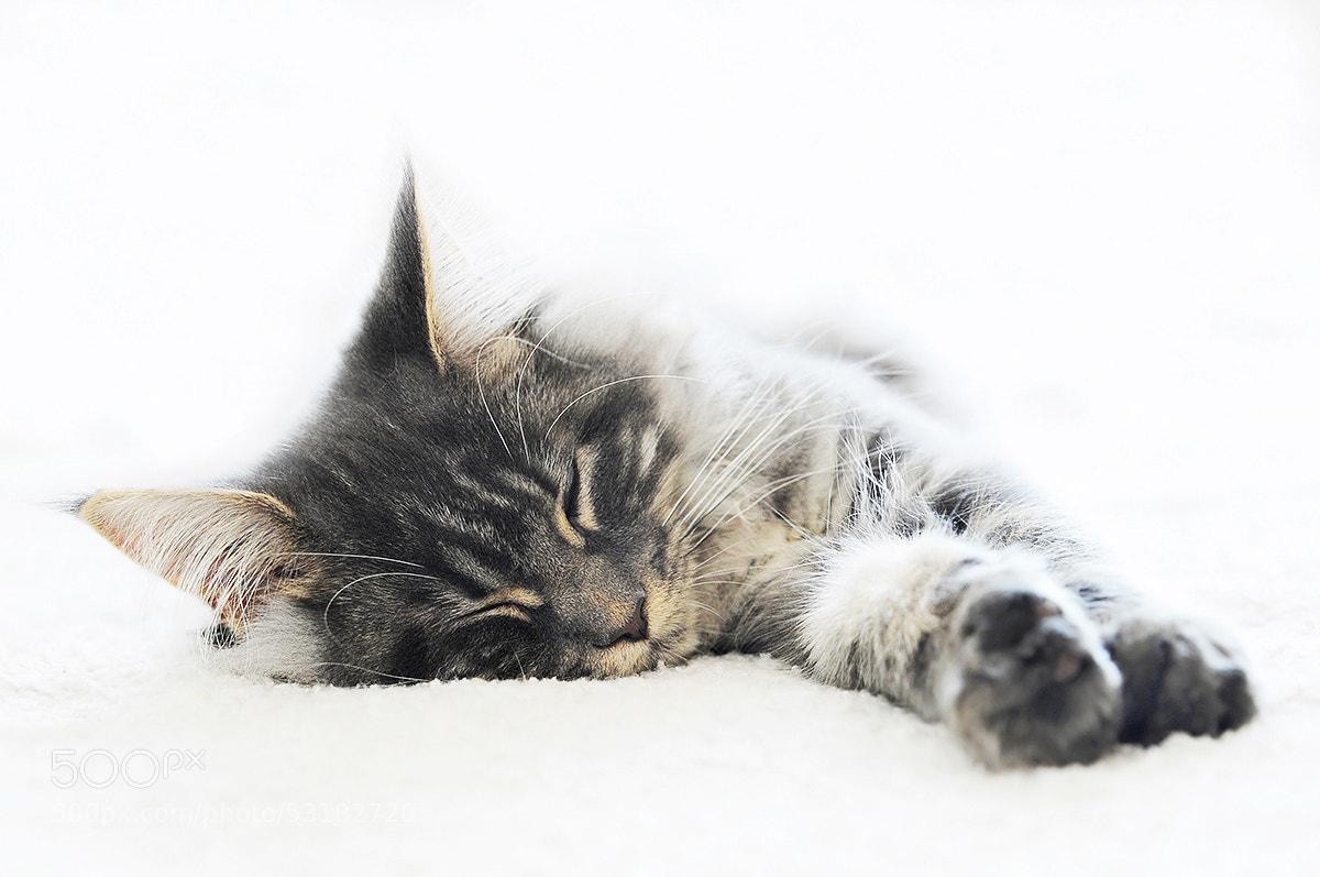 Photograph Sleep well by Rob Janné on 500px